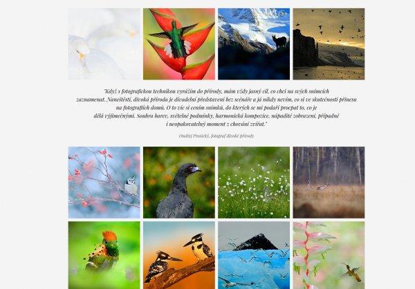 Ondřej Prosický Nature Art Gallery